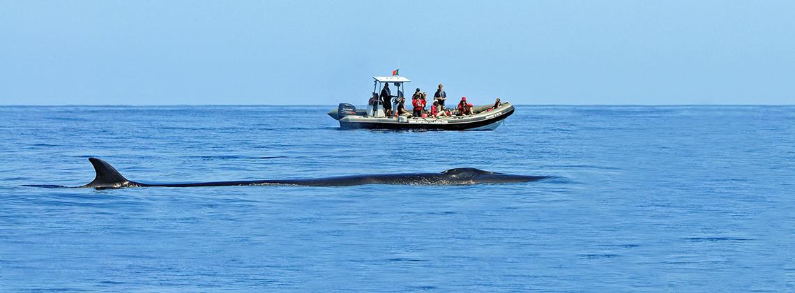 Baleine aux Açores